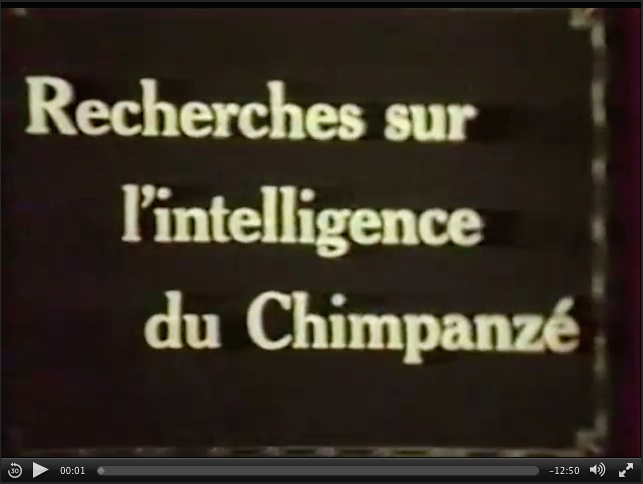 RecherchesIntelligenceChimpanze